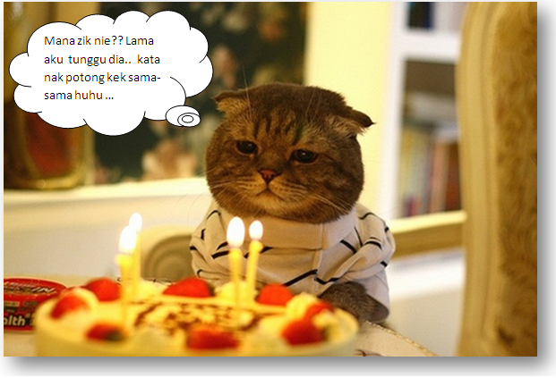 kucingzik.png, kucing funny, kucing special, cute cat, cat celebrate birthday,