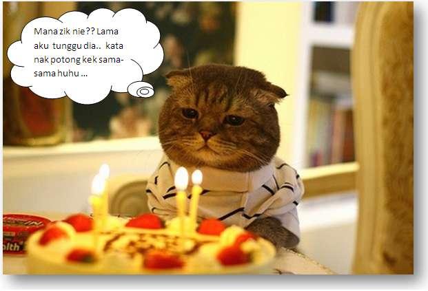 kucingzik.png, kucing funny, kucing special, cute cat, cat celebrate birthday,